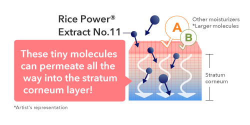These tiny molecules can permeate all the  way into the stratum  corneum layer!