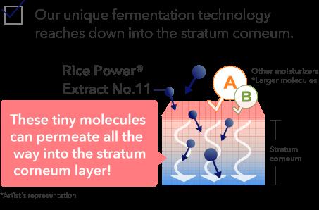 Our unique fermentation technology reaches down into the stratum corneum.