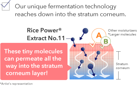 Our unique fermentation technology reaches down into the stratum corneum.